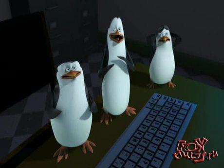 Пингвины из Мадагаскара: 1-28 Люлька для кота