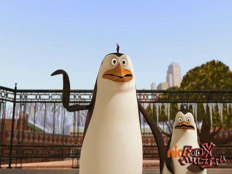 Пингвины из Мадагаскара: 1-30 Меченый