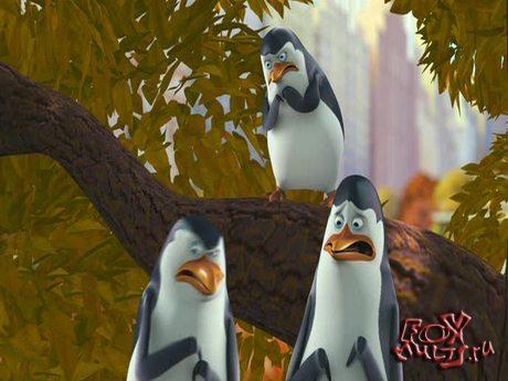 Пингвины из Мадагаскара: 1-35 Я был пингвином-зомби