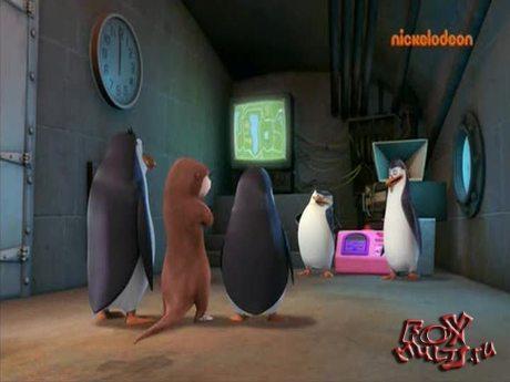 Пингвины из Мадагаскара: 1-42 Бывают случаи выдрее