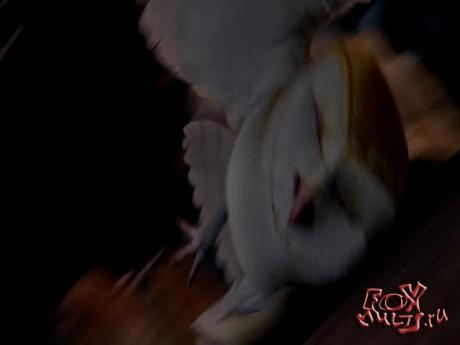 Мультфильмы: Легенды ночных стражей