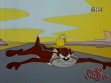 Тасманский дьявол: 31 - Тасманский дьявол-зверь с птичьими мозгами. Готов, желаю, не способен